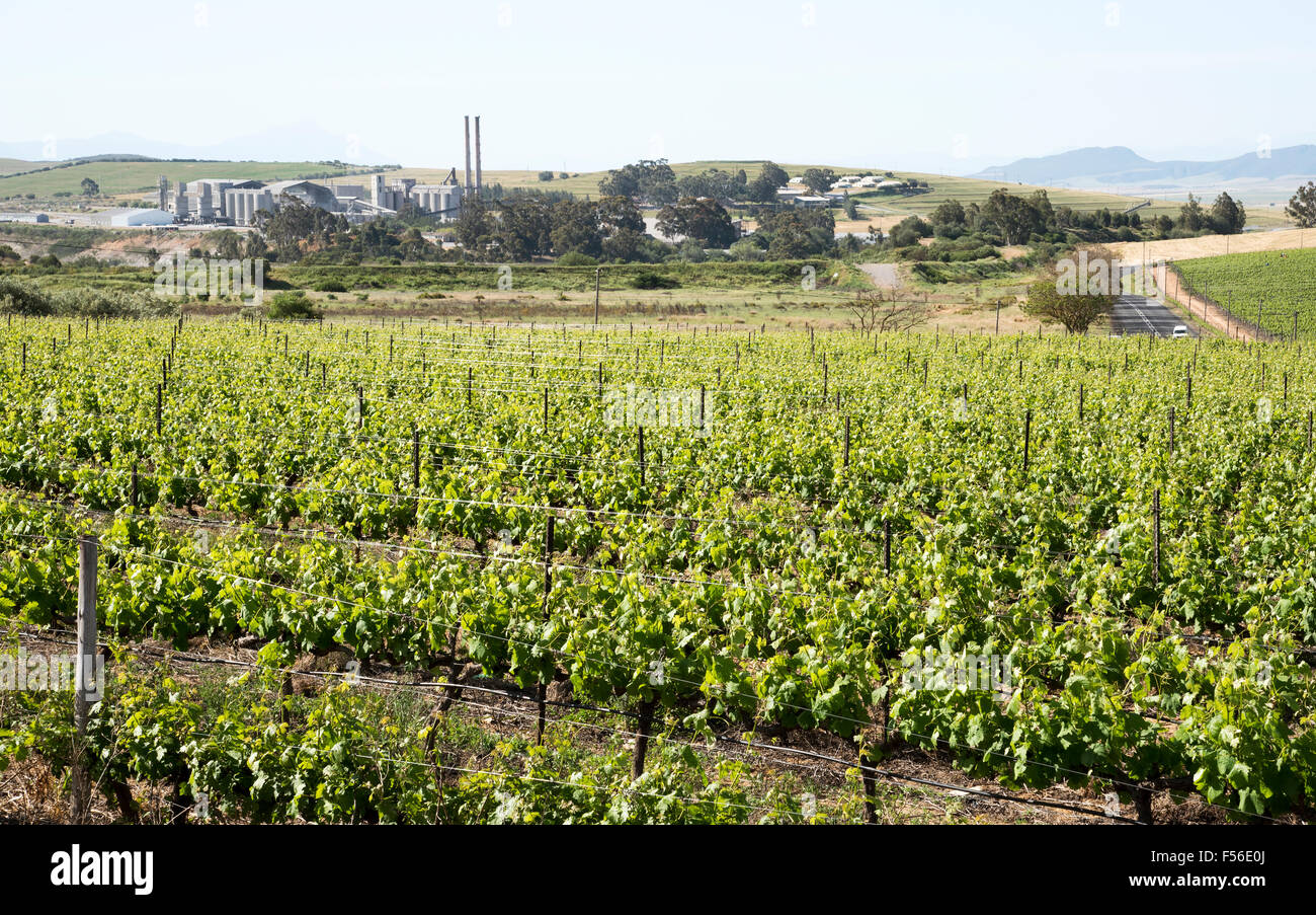 Cement manufacturing plant on the skyline and overlooking the vineyards at Riebeek West in the Swartland region Stock Photo