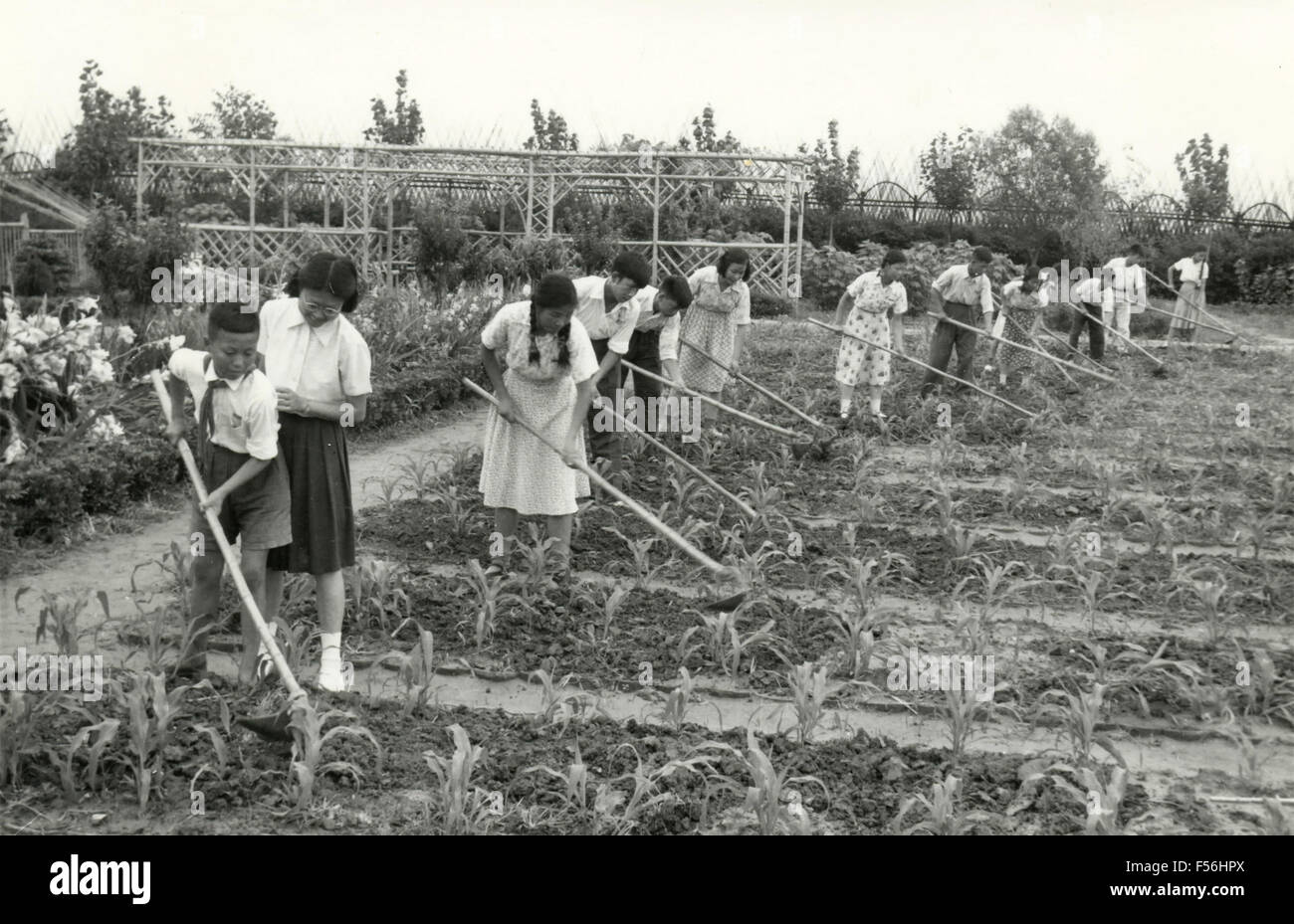 Teaching to cultivate the garden, China - Stock Image