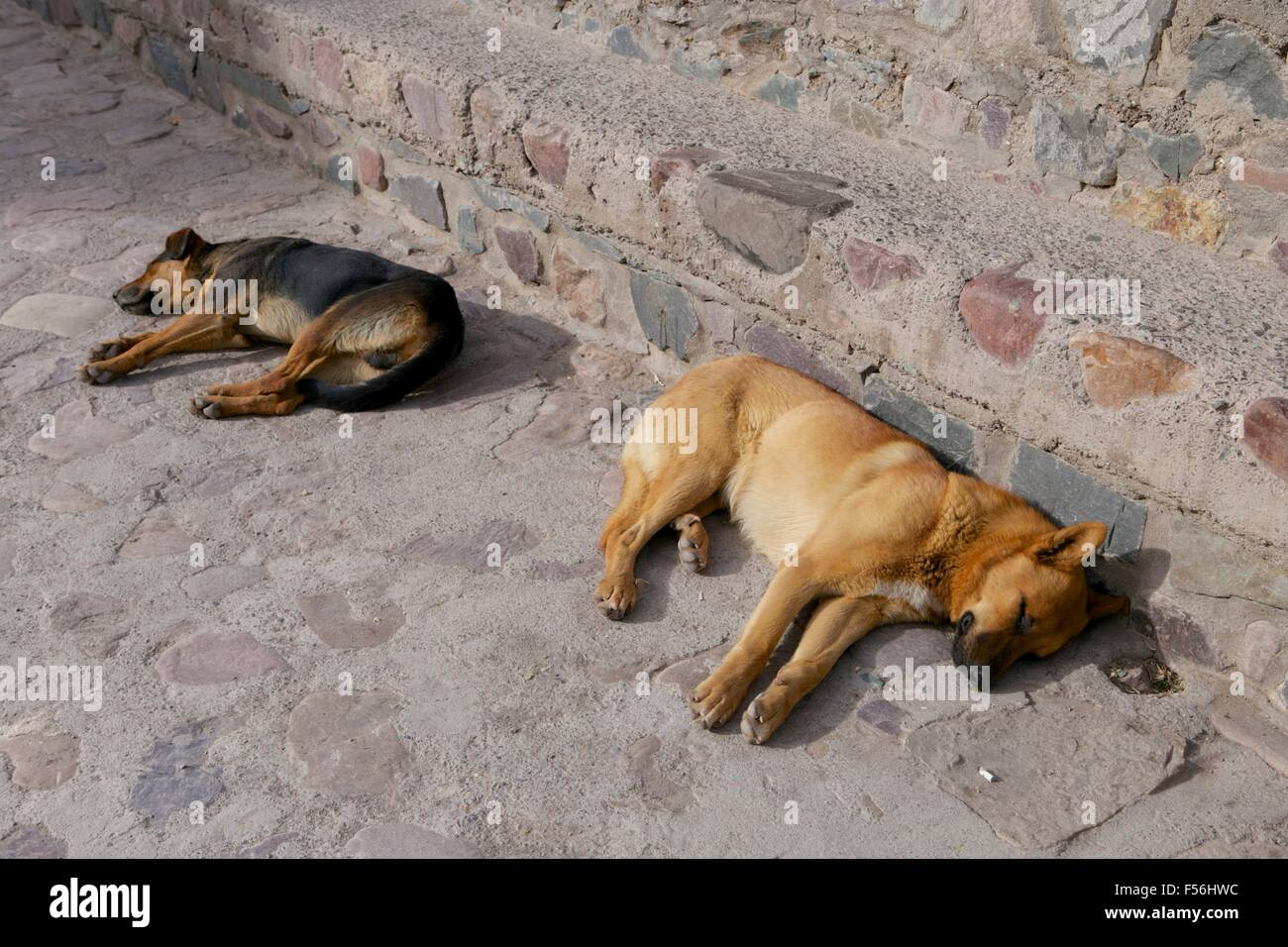 Two dogs lying on the street sleeping in the sun (Argentinian village). - Stock Image