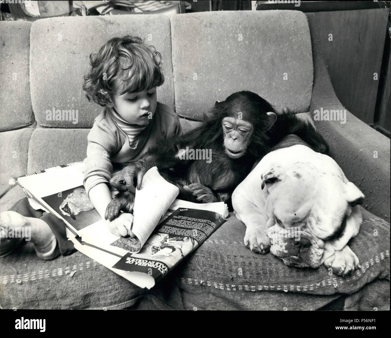 1972 - chimpanzee A bright spark in the clews family  anew