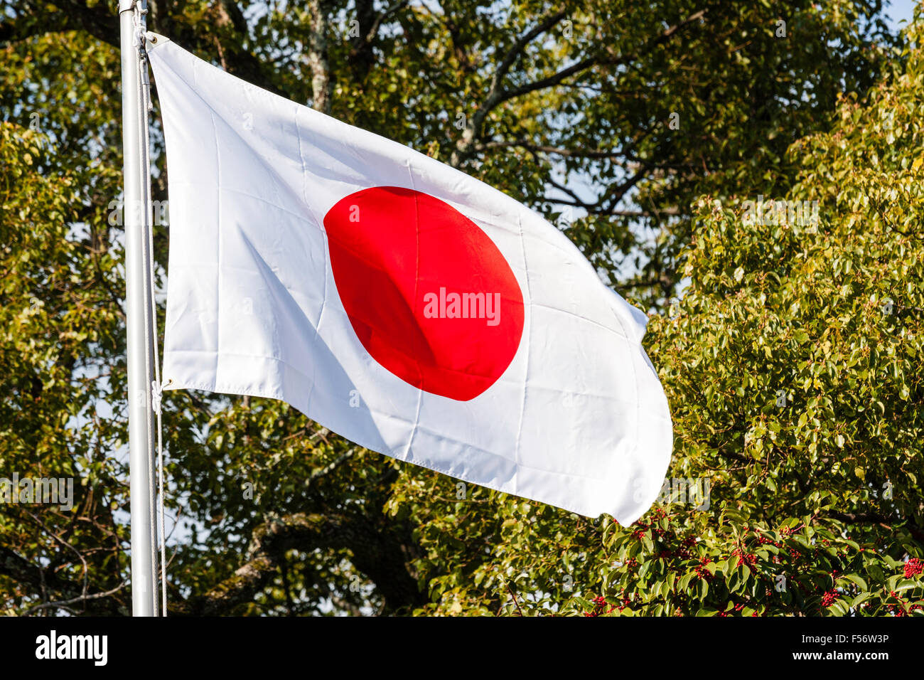 Japanese flag, 'rising sun', fluttering in wind and sunlight against background of tree branches and green - Stock Image