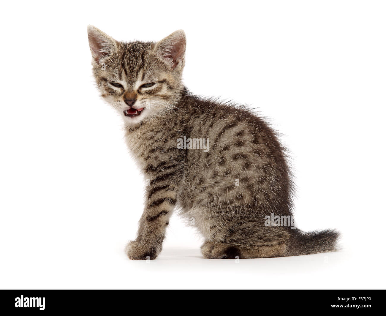 Angry kitten - Stock Image