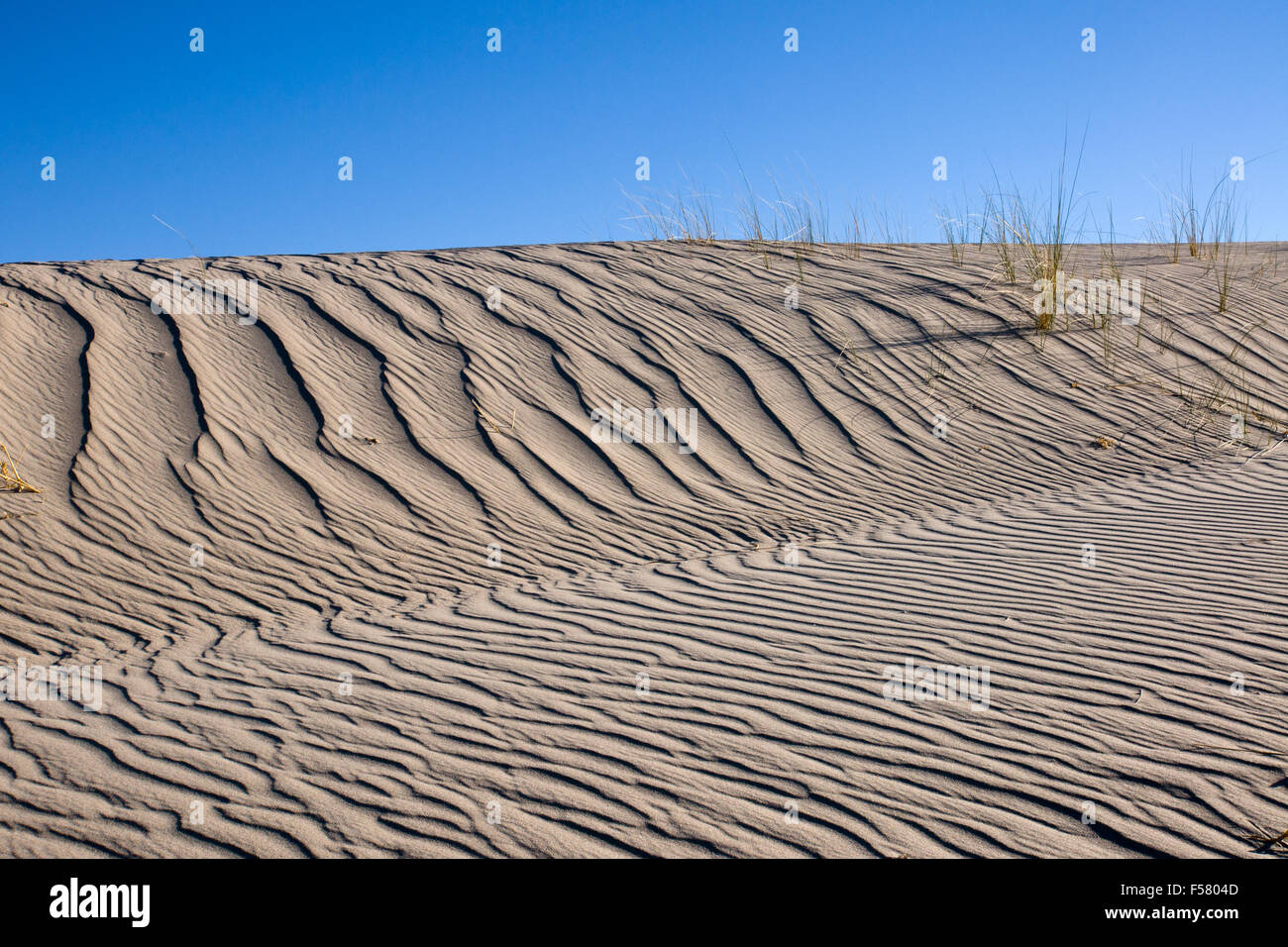 A sand dune with same marram grass and blue sky - Stock Image