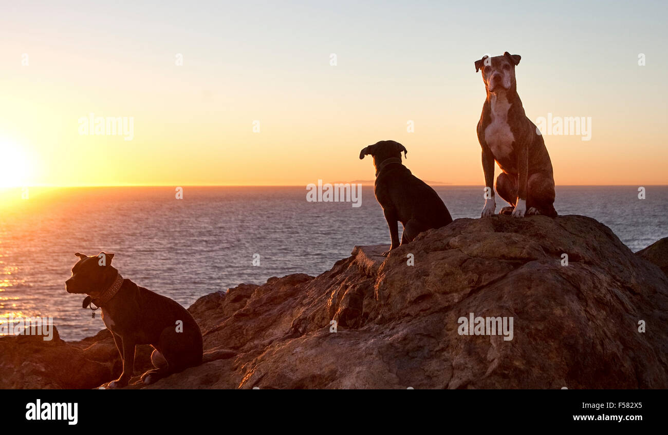Three dogs sit atop giant rock overlooking ocean at sunset - Stock Image