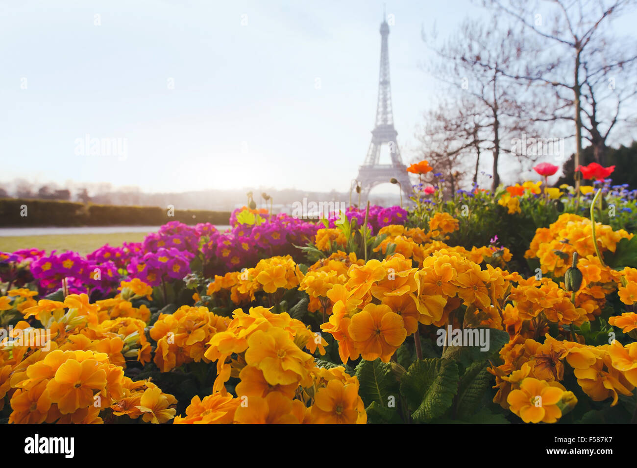 Paris In Spring Yellow Flowers In Foreground And Eiffel Tower Stock