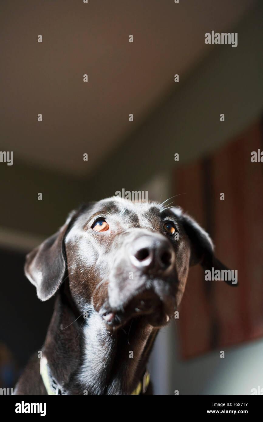 portrait of black dog. - Stock Image