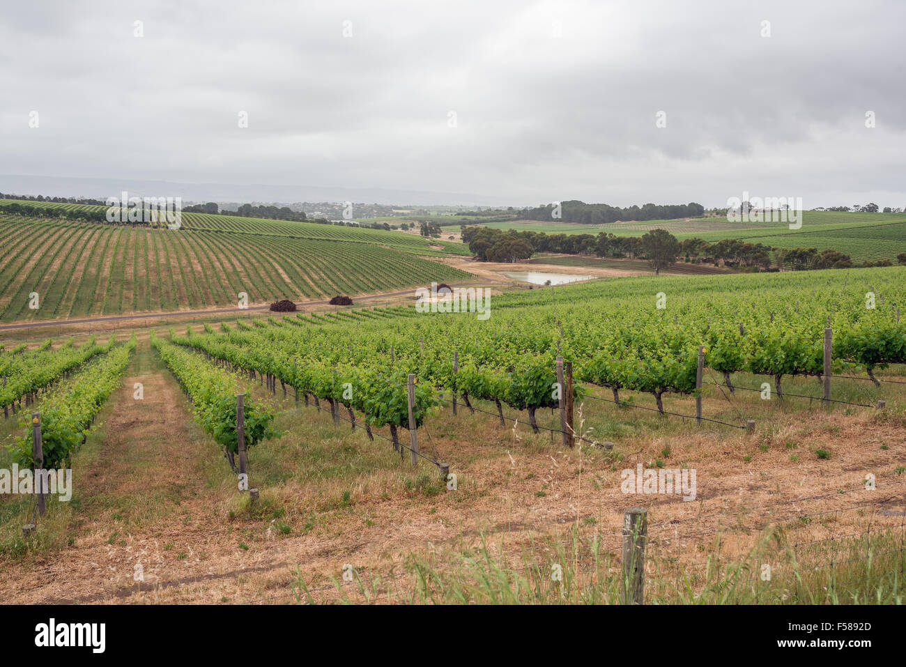 The beautiful South Australian town of McLaren Vale in the Southern Vales wine growing region - Stock Image