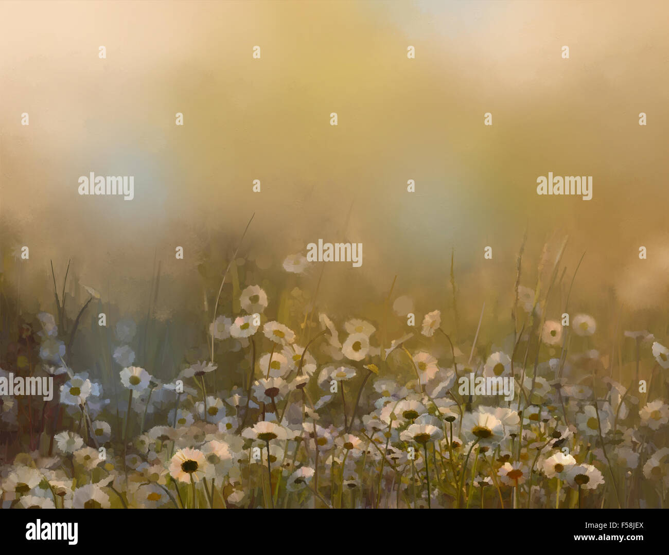Oil painting Daisy flowers in meadow at sunset - Stock Image