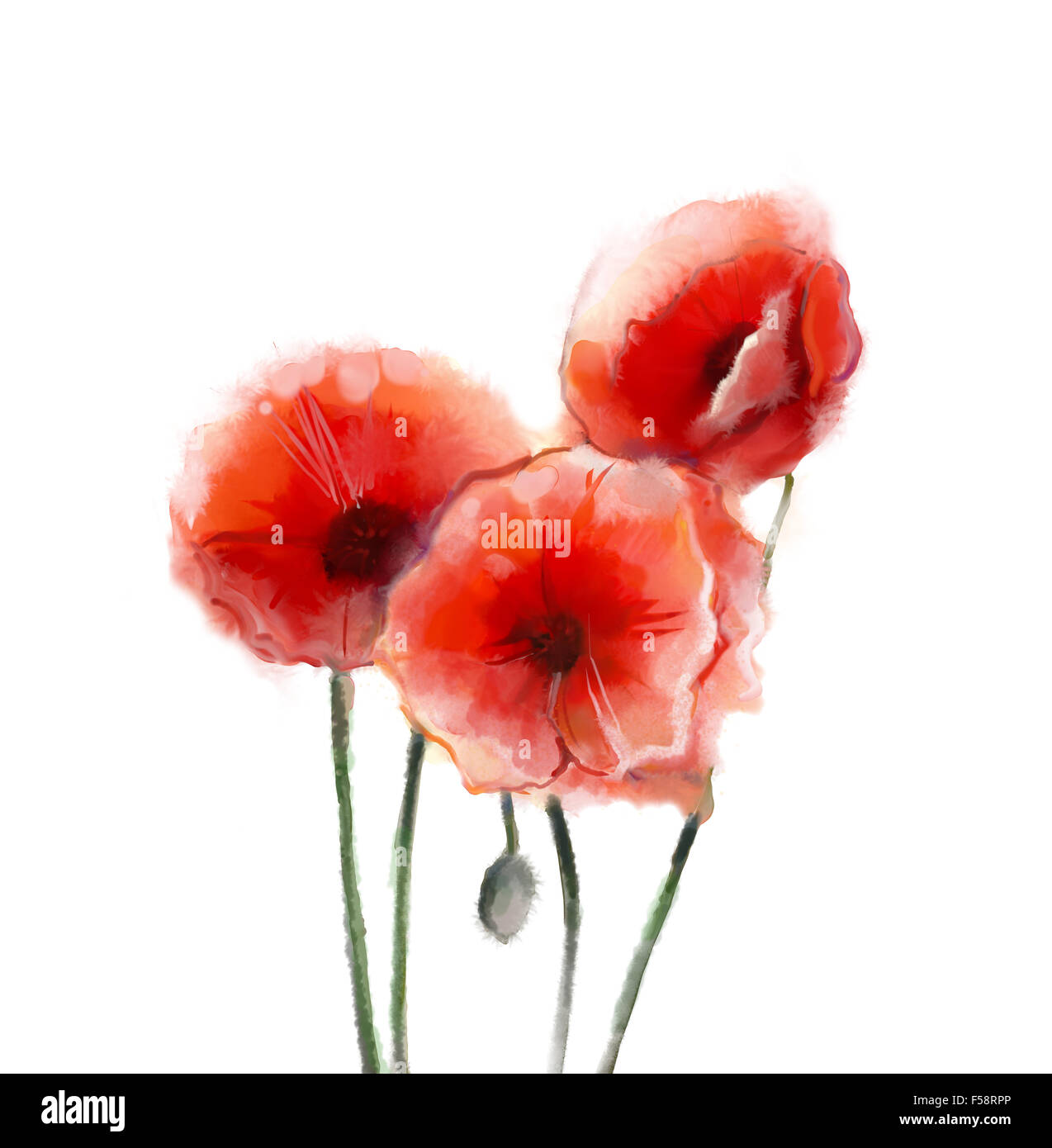Red poppy flowers watercolor painting isolated on white background red poppy flowers watercolor painting isolated on white background mightylinksfo