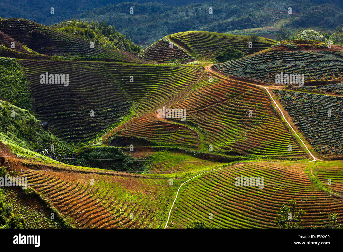 Fields in the mountains near Sapa village, Northern Vietnam. Stock Photo