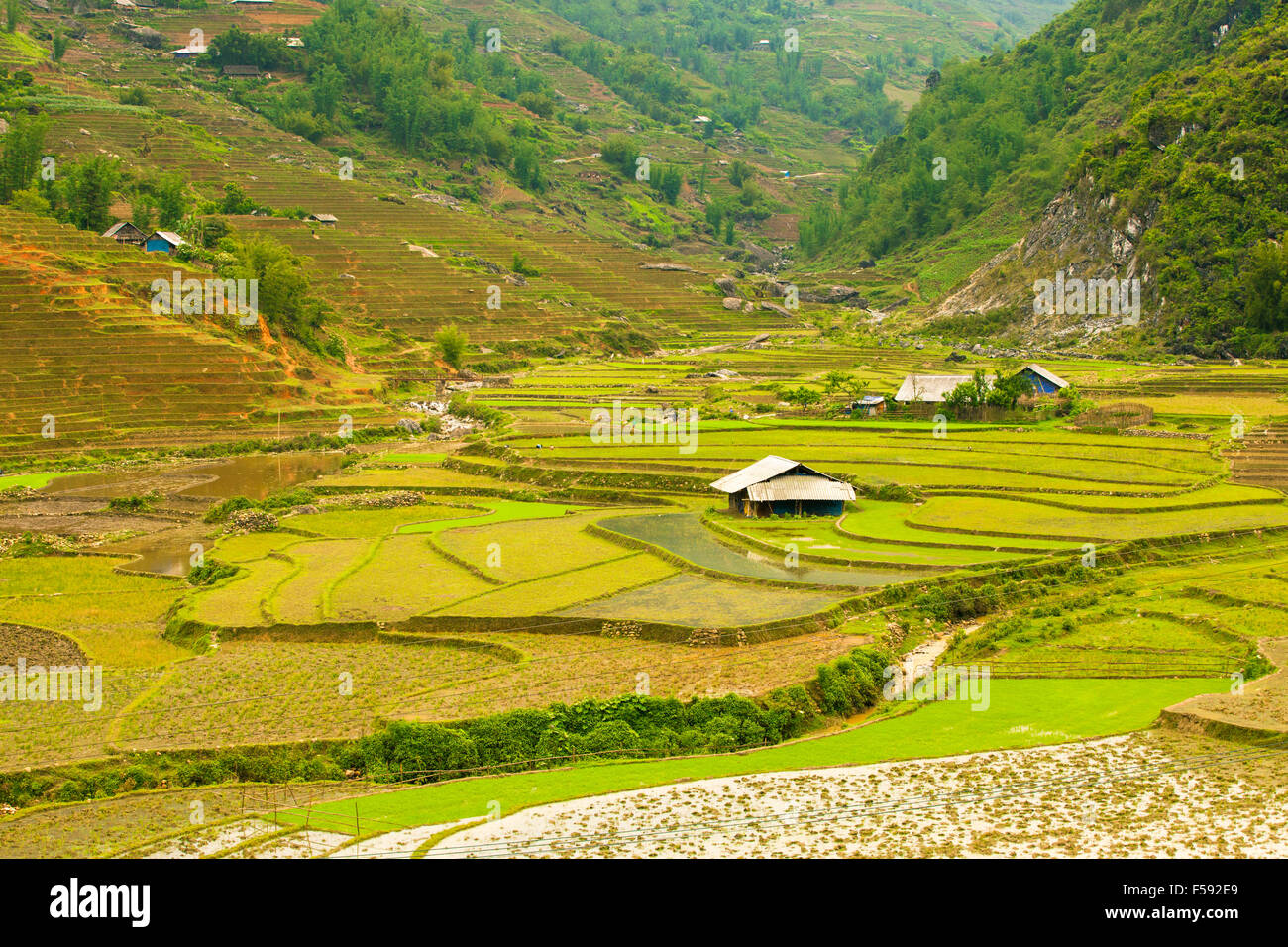 Rice paddies in the mountains near Sapa village, Northern Vietnam. - Stock Image
