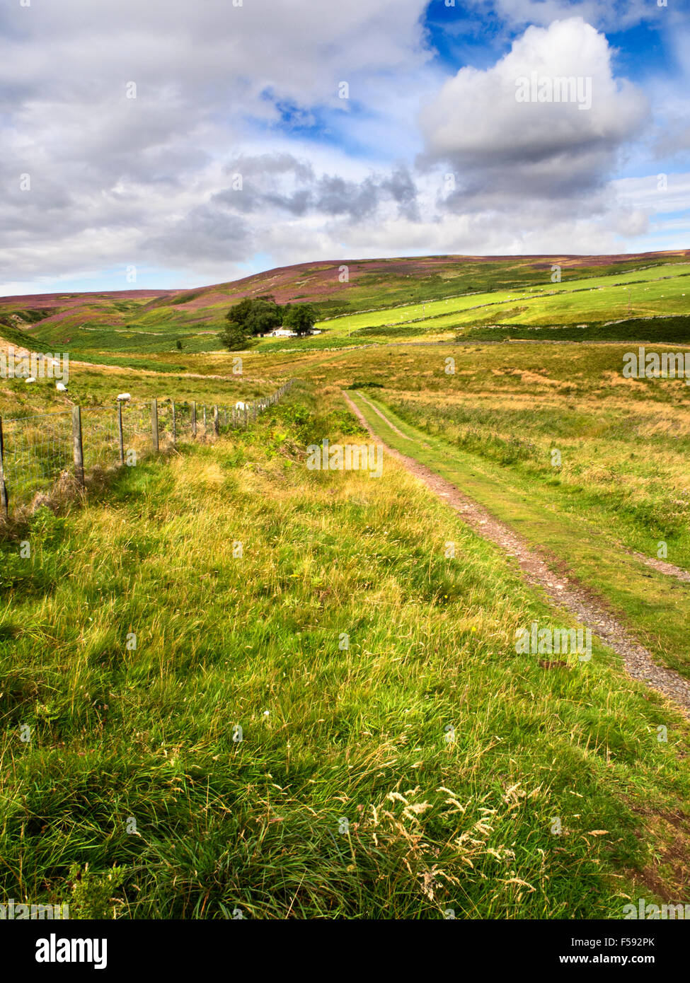 Bells Valley in the Northumberland National Park near Wooler Northumberland England - Stock Image