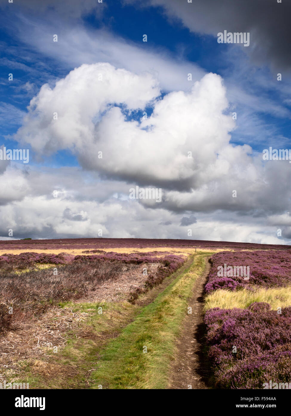 White Cloud Formation over Heather Moorland near Wooler Northumberland National Park England - Stock Image