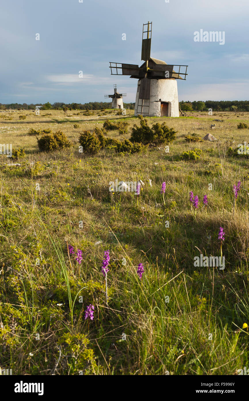 Gammal windmill on the island of Gotland, Sweden - Stock Image