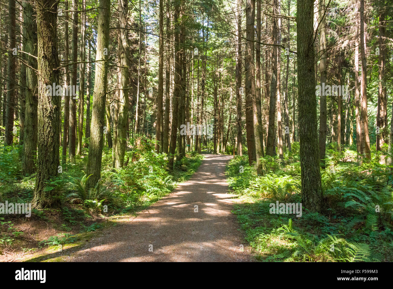 Forest trail in the interior of Stanley Park, Vancouver, BC, Canada. - Stock Image