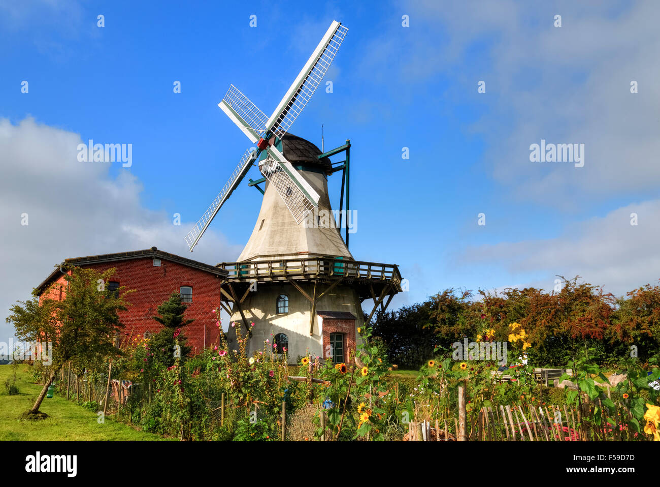 windmill Fortuna, Unewatt, Schleswig-Holstein, Germany - Stock Image