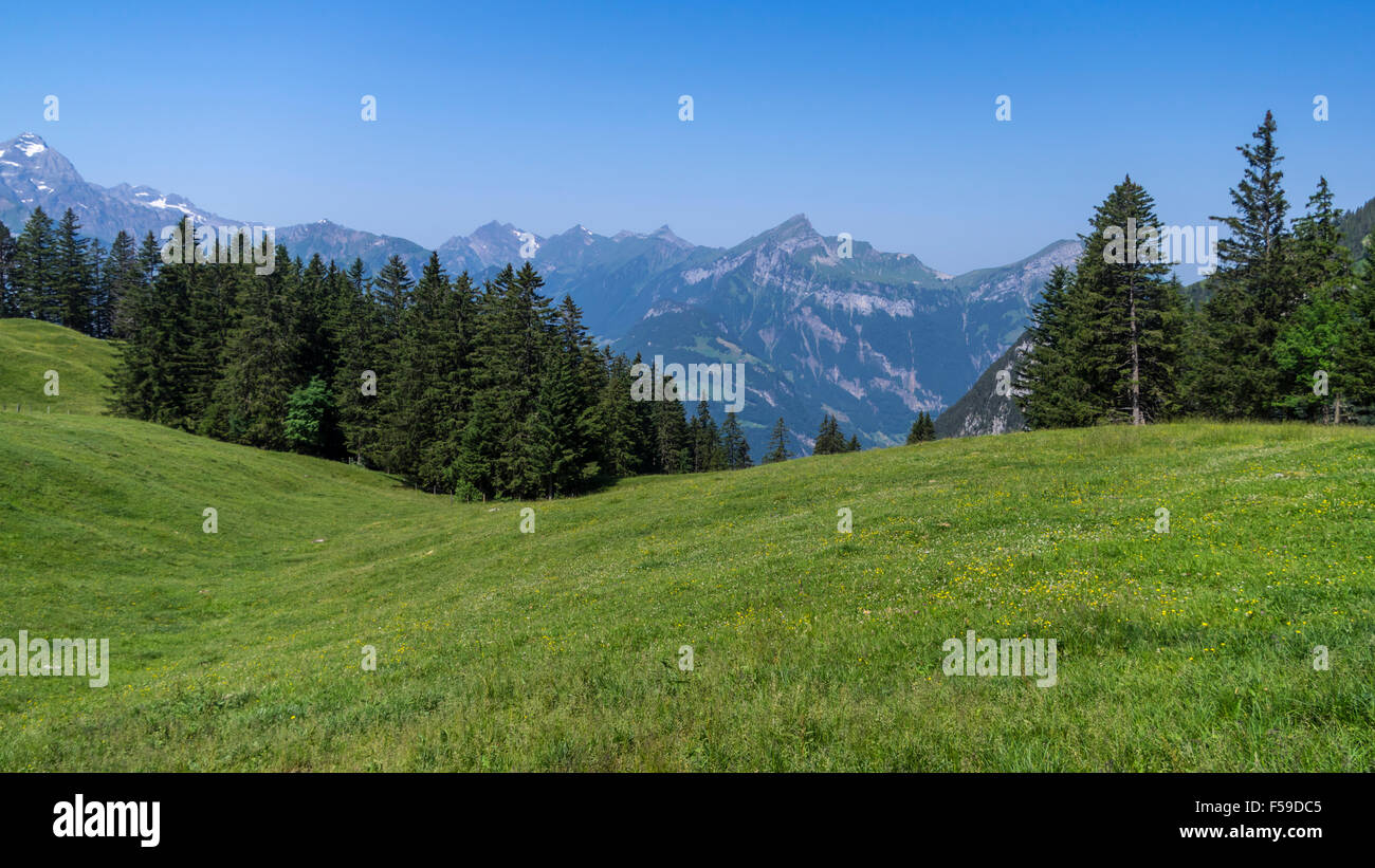 View of an alpine meadow in summer, framed by fir trees. Eggberge, Canton of Uri, Switzerland. - Stock Image