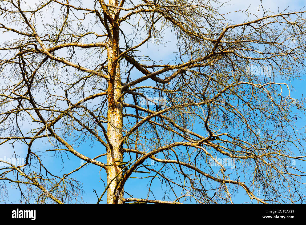 Upper branches of a tree - Stock Image