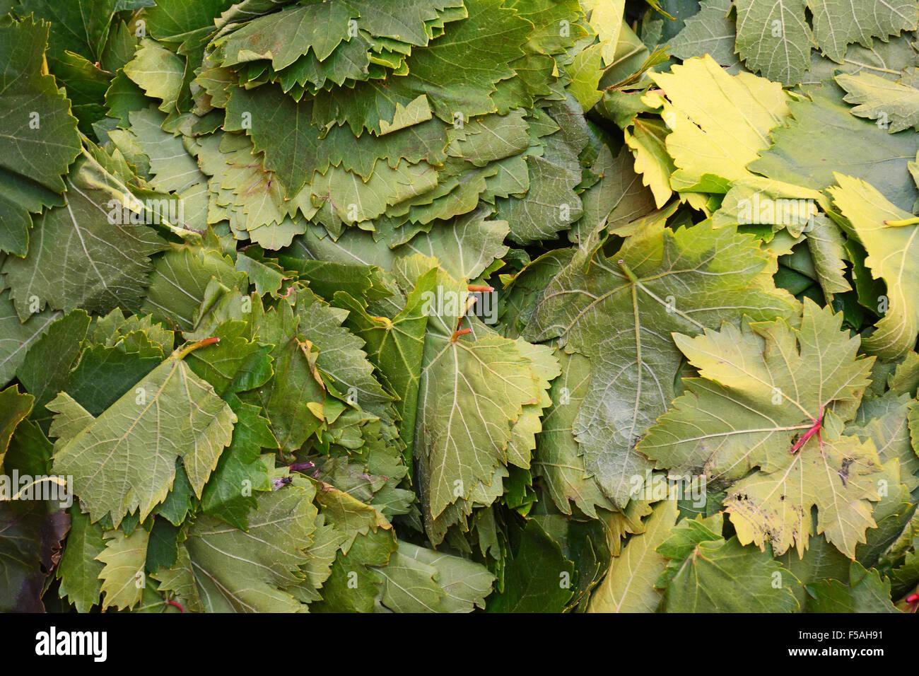 Vine leaves - Stock Image