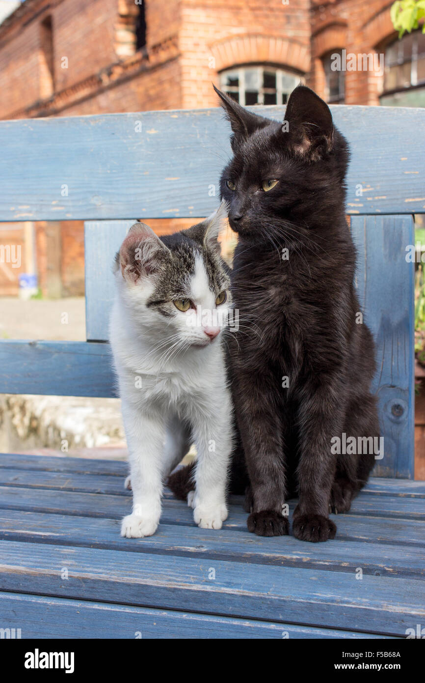 Two cats sitting on a blue bench Stock Photo 89371530 , Alamy