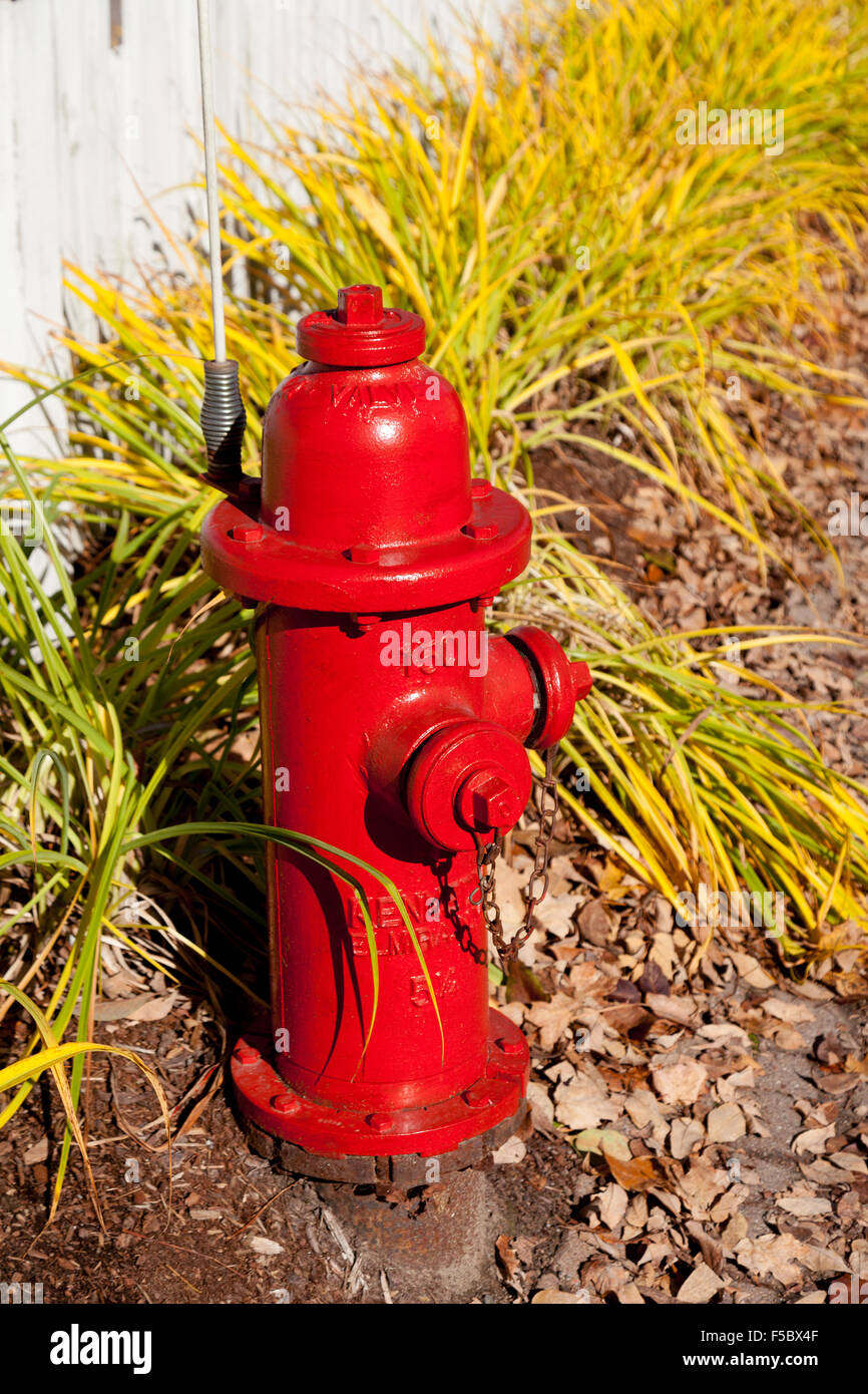 Red fire hydrant, Stowe Vermont USA - Stock Image