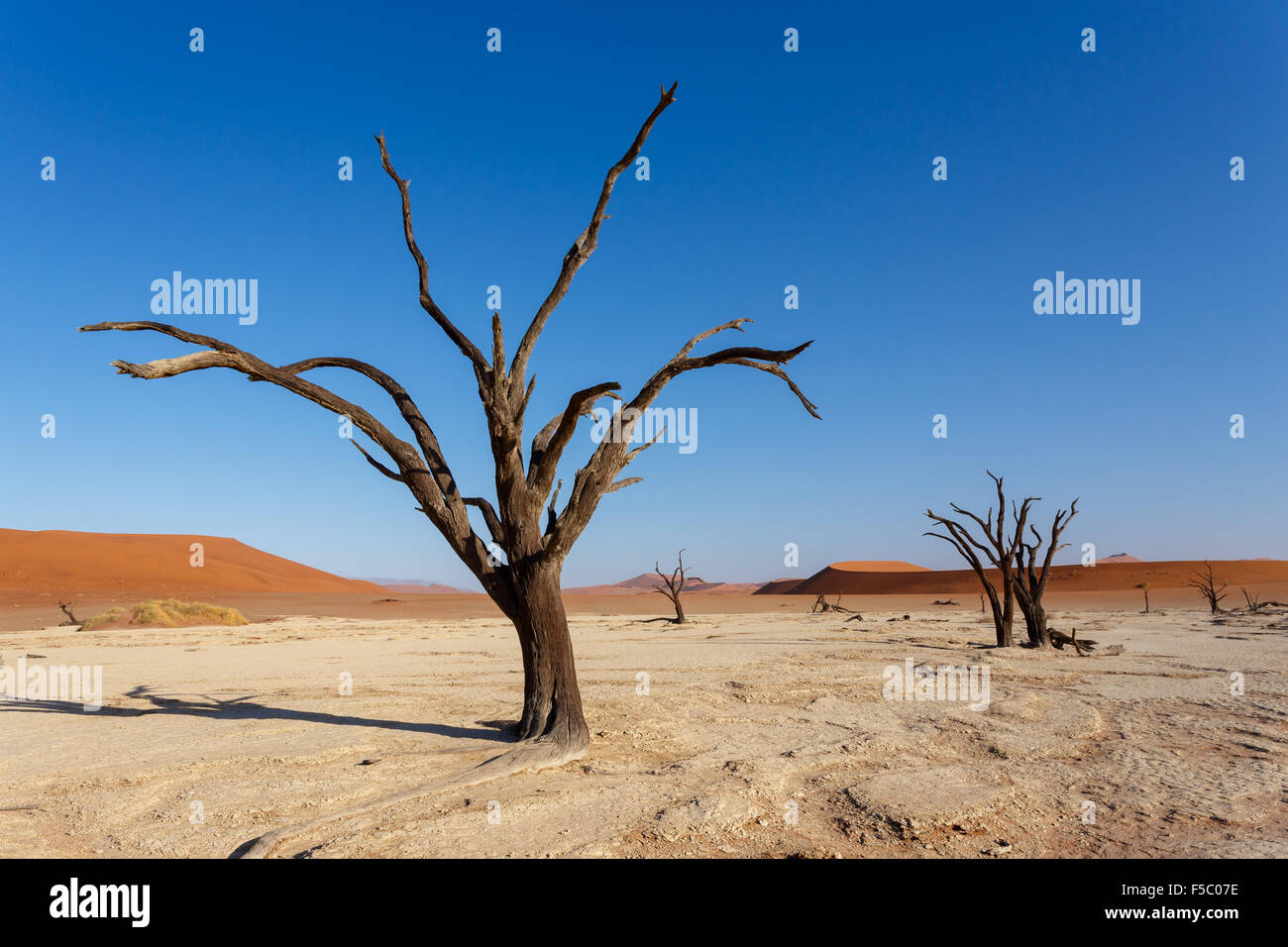 wide panorama of beautiful sunrise landscape of hidden Dead Vlei in Namib, blue sky, best place of Namibia - Stock Image