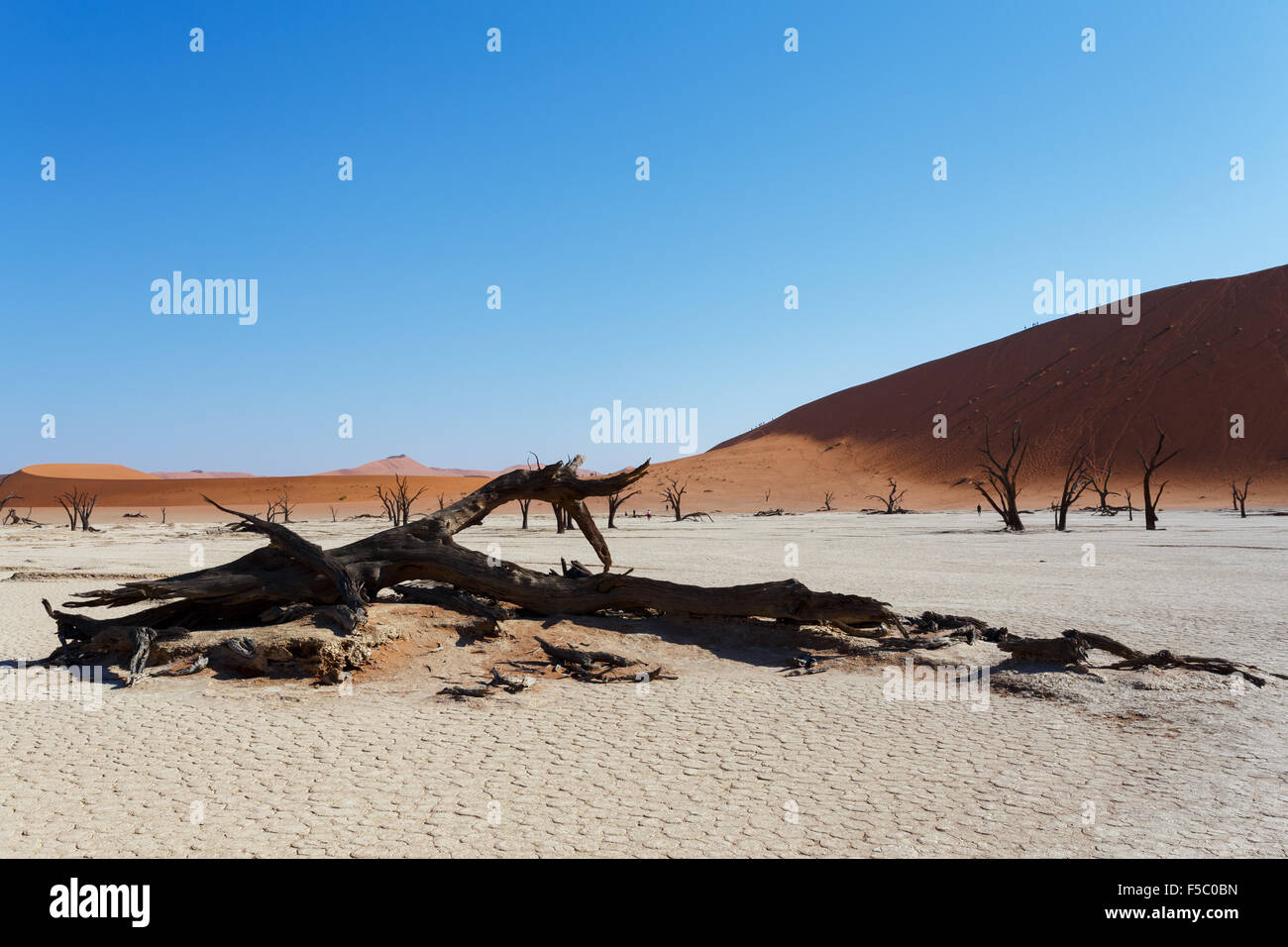 beautiful sunrise landscape of hidden Dead Vlei in Namib, blue sky, best place of Namibia - Stock Image