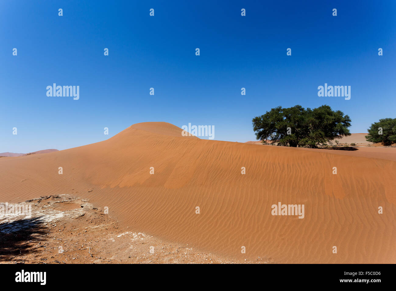 beautiful sunrise landscape of hidden Dead Vlei in Namib, blue sky, best place of Namibia Stock Photo