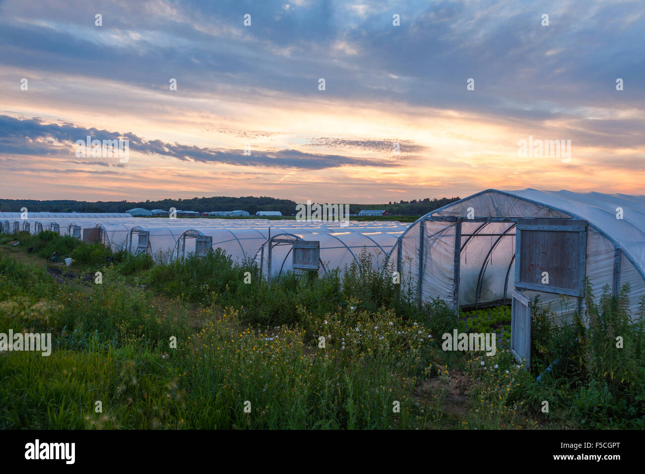 Home made greenhouses in the Holland Marsh at sunset. King Township, Ontario, Canada. - Stock Image