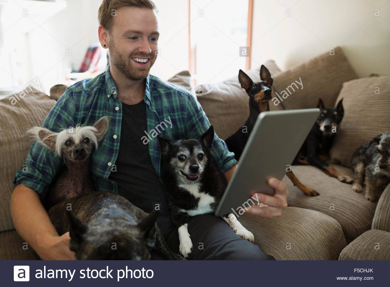 Man with six dogs using digital tablet sofa Stock Photo