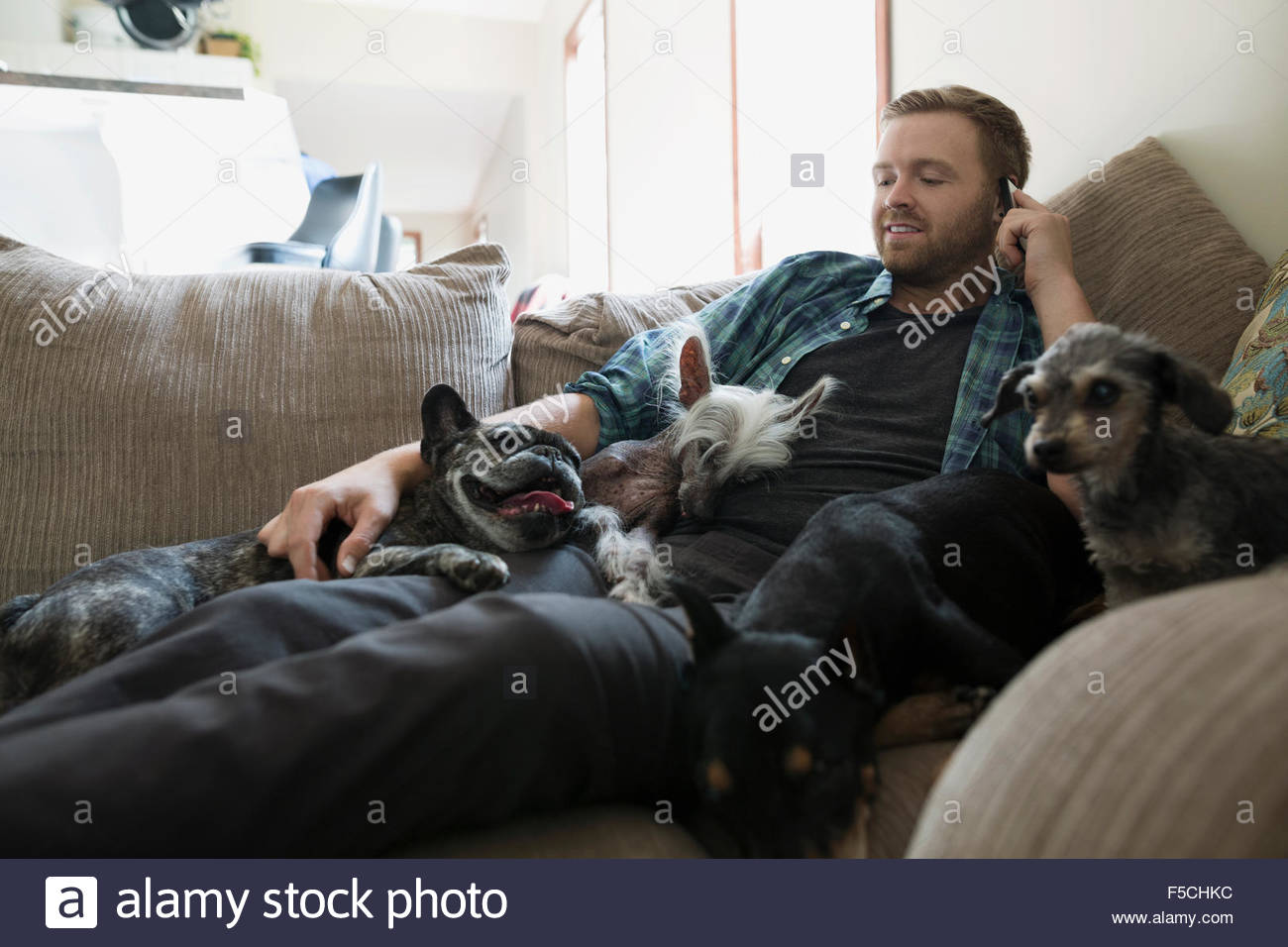 Man cuddling with four dogs talking cell phone - Stock Image