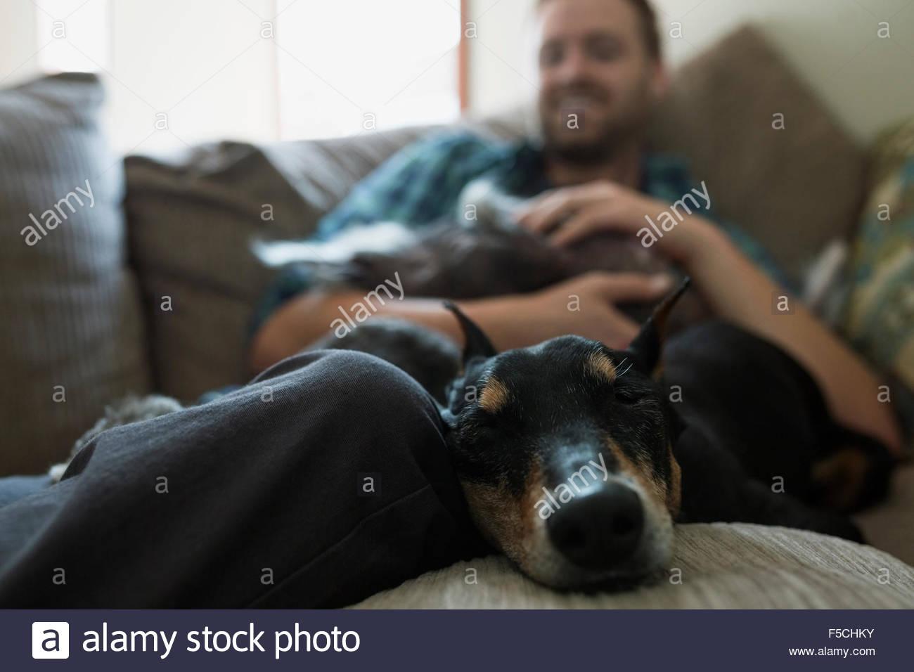 Sleeping dog with man on sofa - Stock Image
