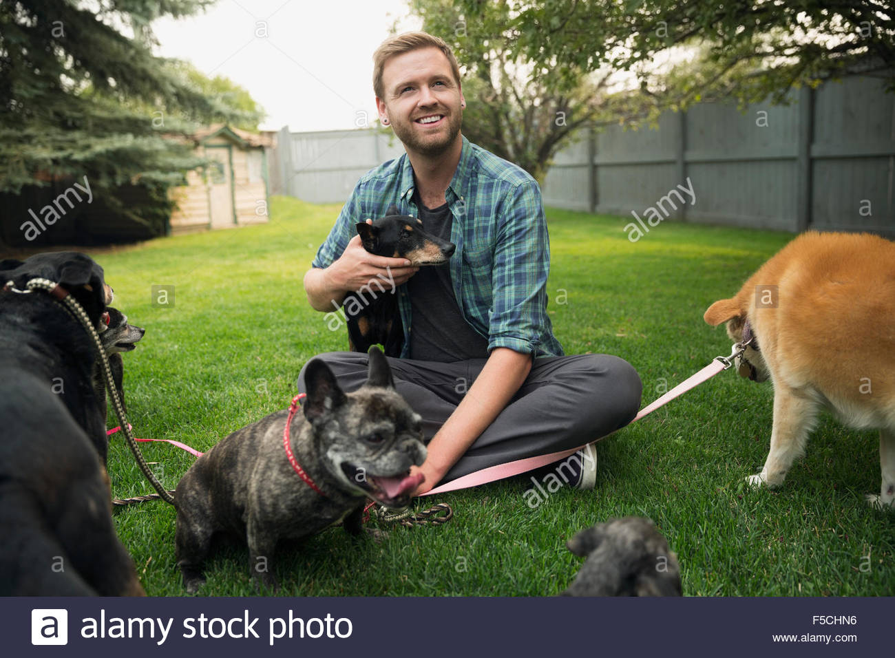 Man with dogs on leashes sitting in grass Stock Photo