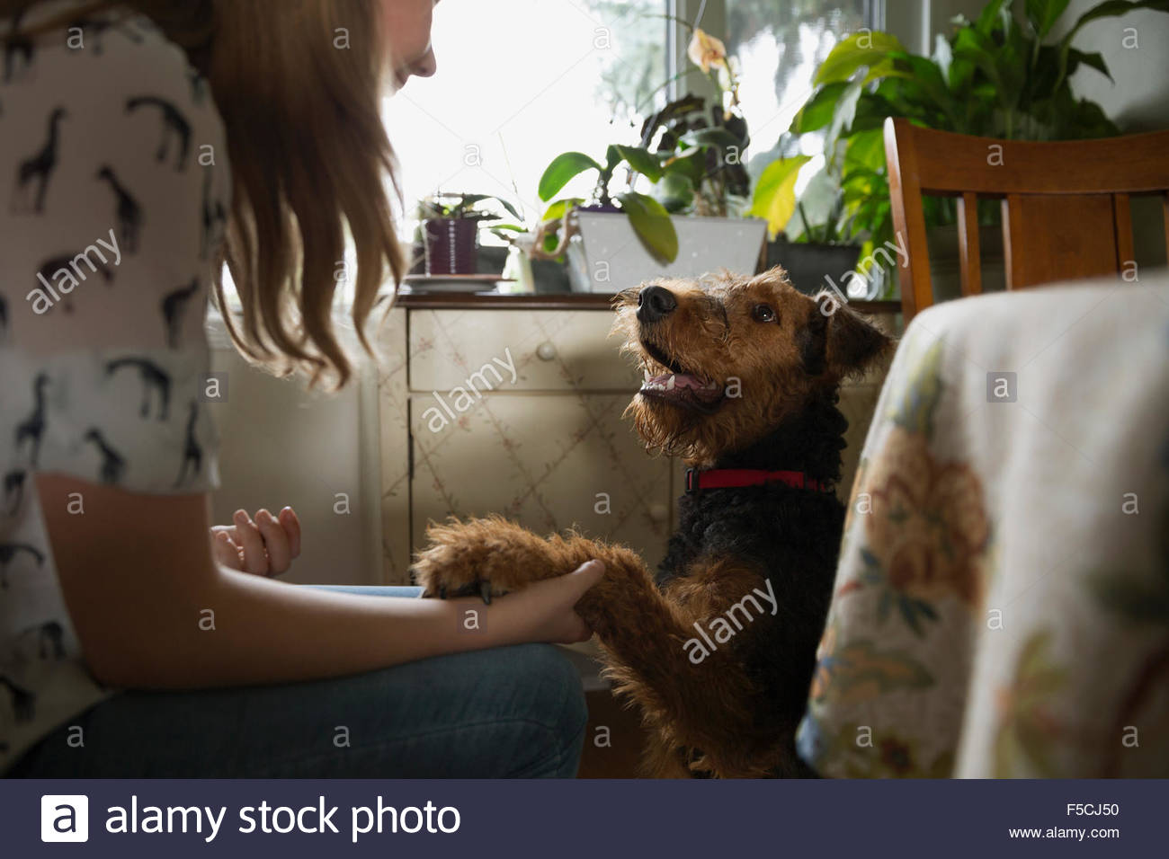 Girl shaking dog paw in kitchen - Stock Image