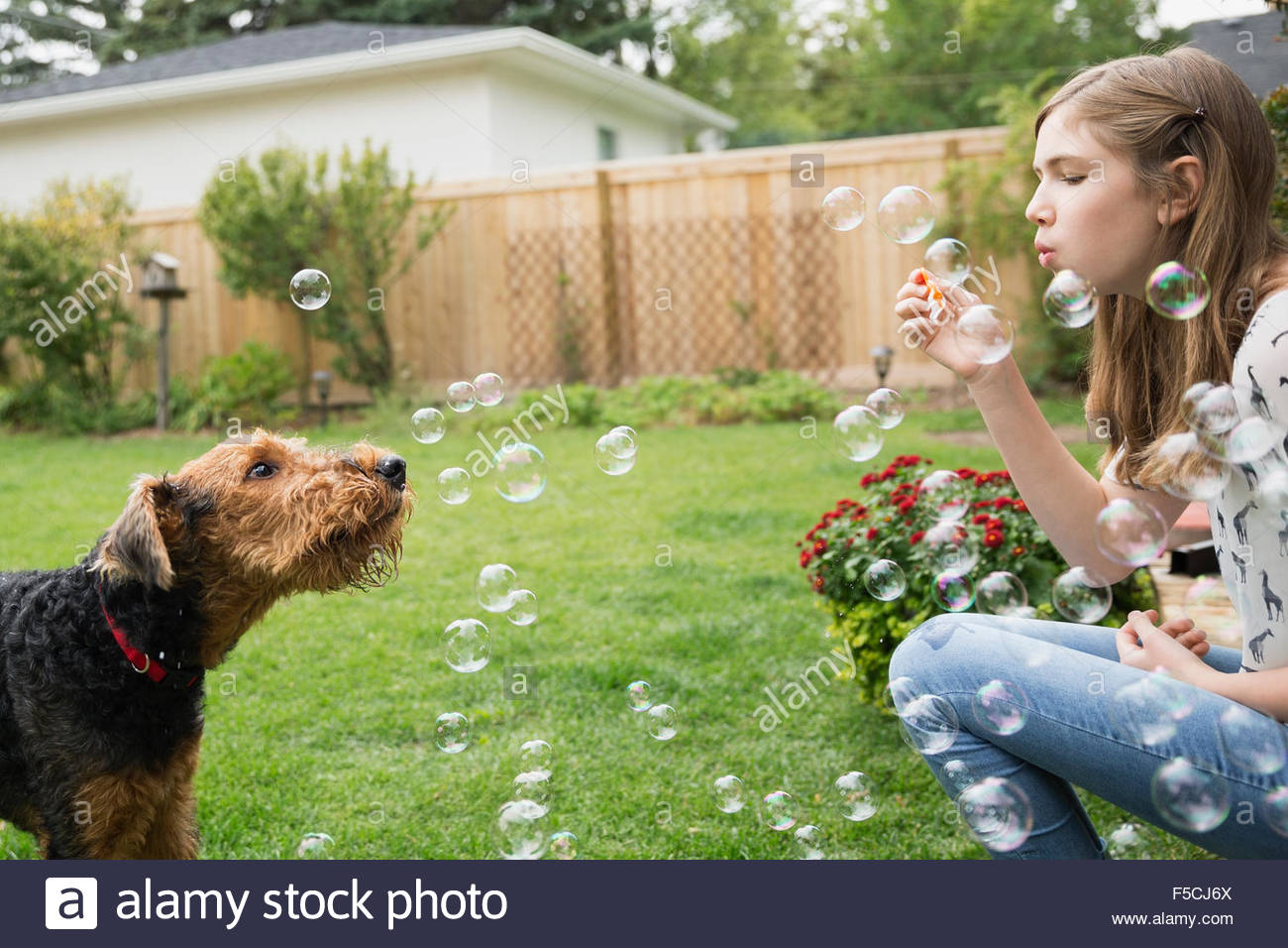 Curious dog watching girl blowing bubbles in backyard - Stock Image