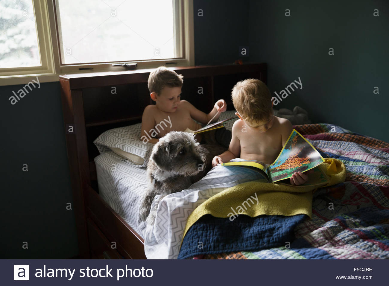 Brothers reading books in bed with dog - Stock Image