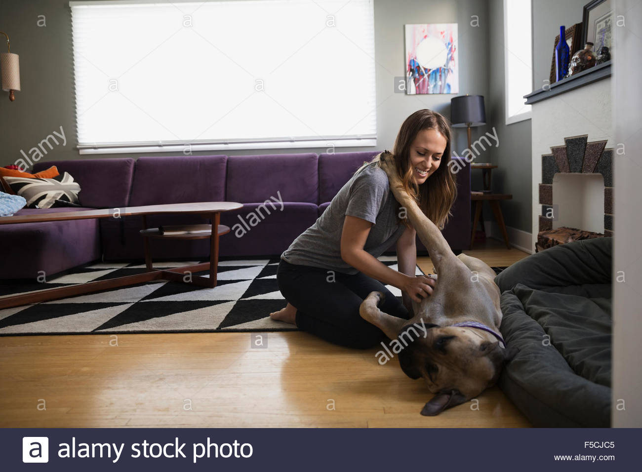Woman scratching dog's belly on living room floor - Stock Image