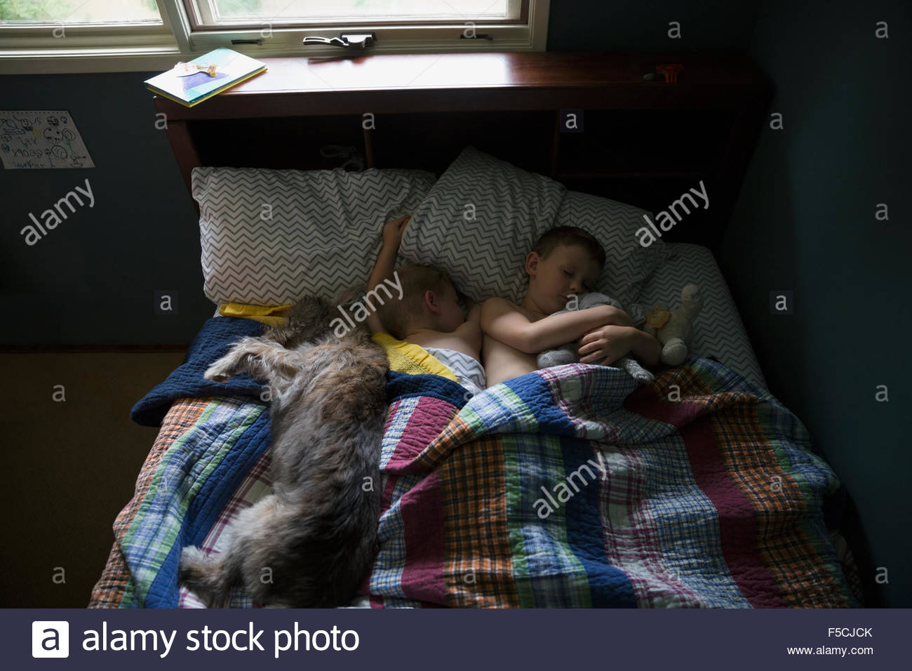 Dog and brothers sleeping in bed - Stock Image