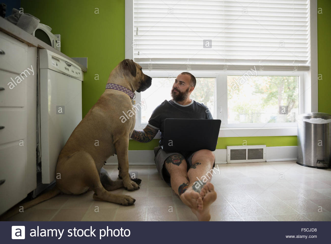 Man with laptop petting dog on kitchen floor - Stock Image