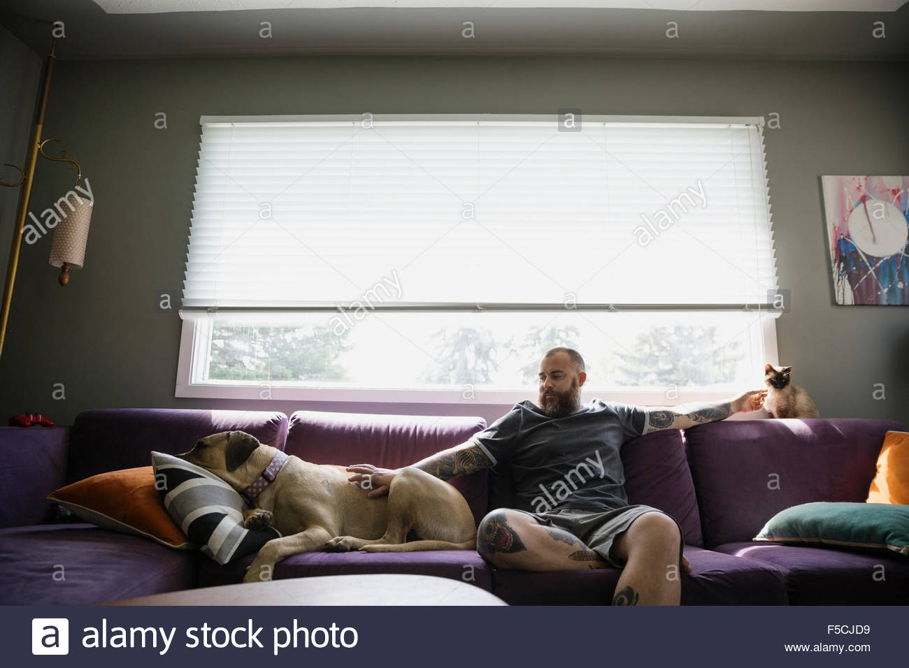 Man on sofa petting dog and cat - Stock Image
