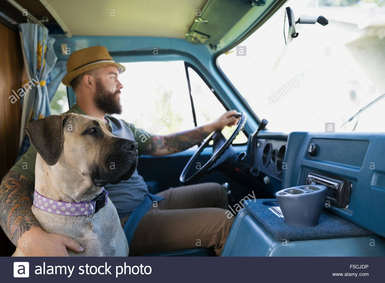 Dog riding with man in van - Stock Image