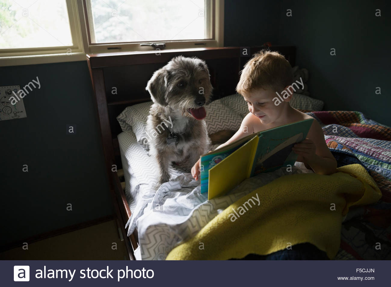 Boy reading book in bed with dog - Stock Image