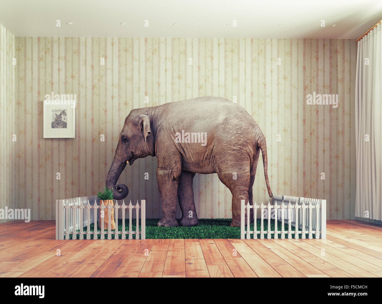 An Elephant calf as the pet. Photo combination concept - Stock Image