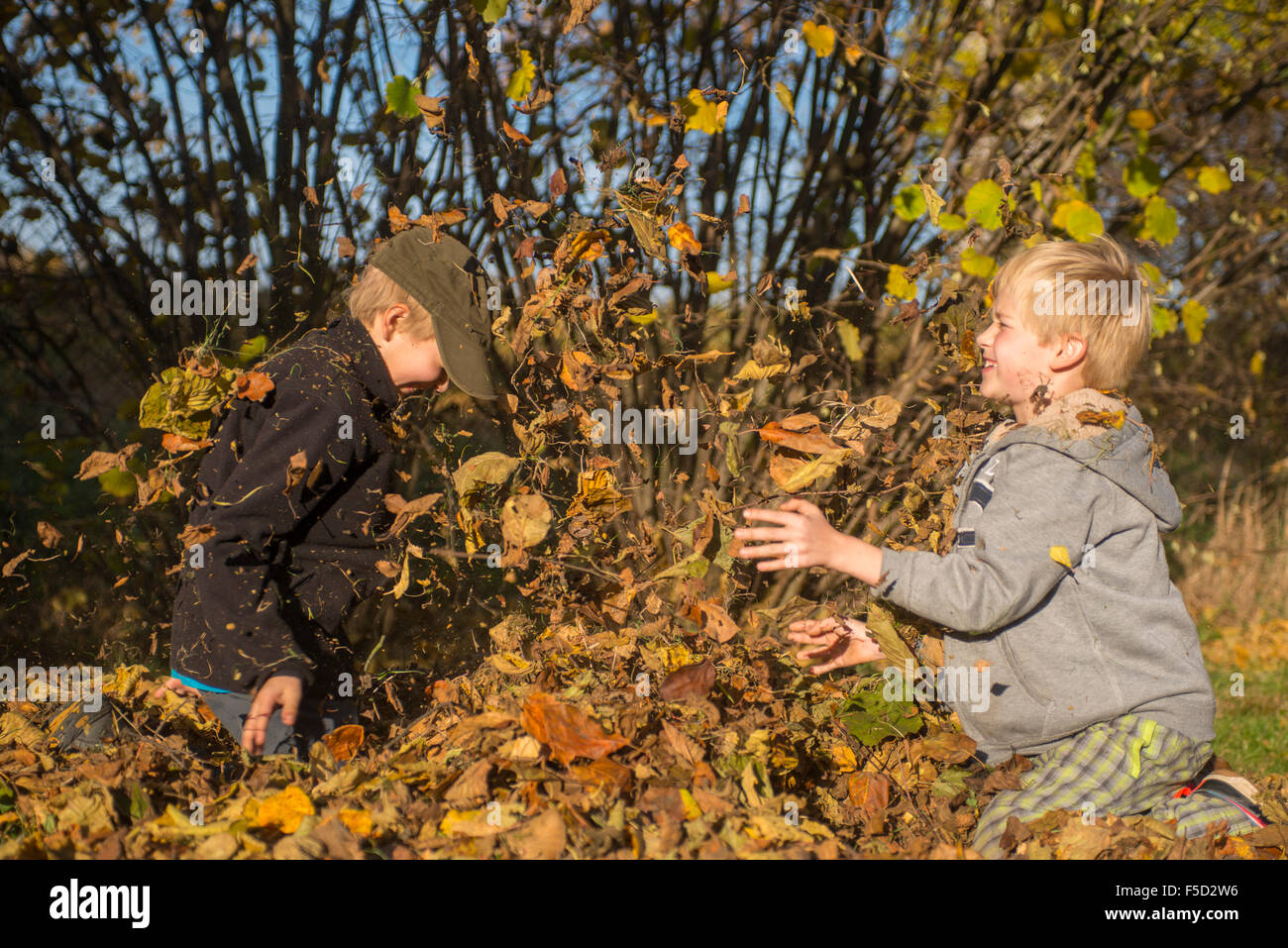 Two Children boys playing, throwing autumn leaves from pile in the ...
