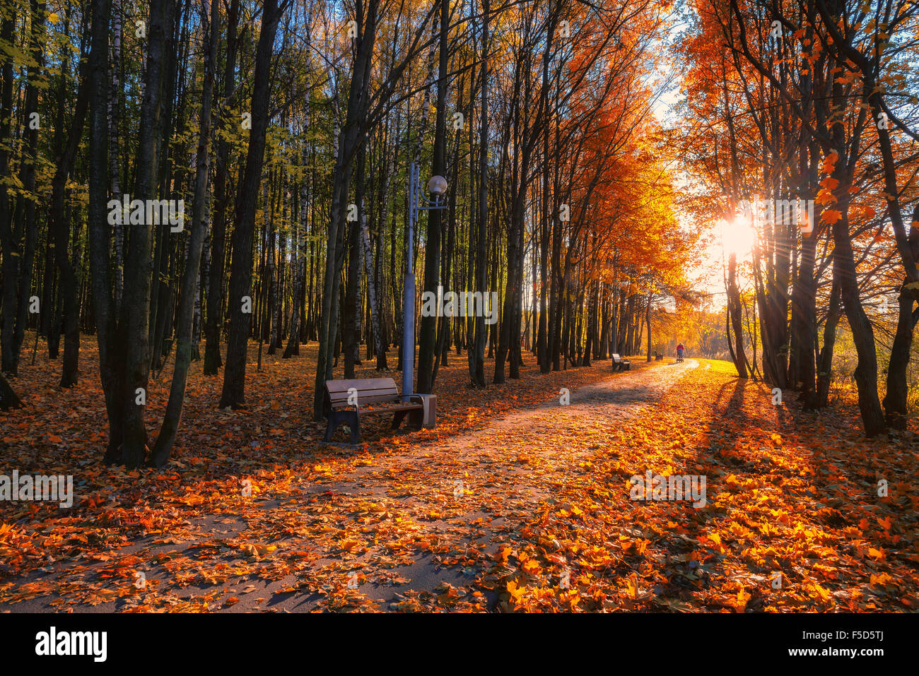 Colorful foliage in the autumn park - Stock Image