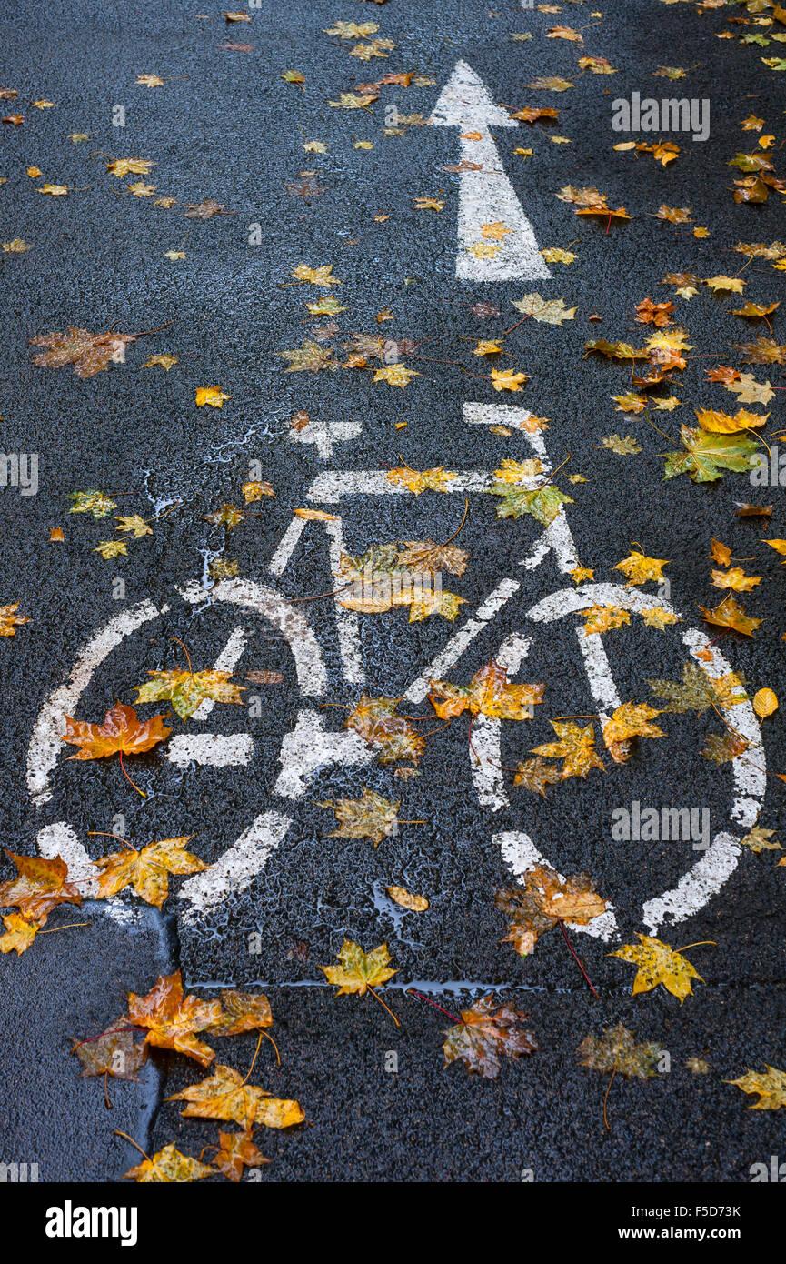 Designated cycle track, rain-slicked with autumn leaves, Bamberg, Upper Franconia, Bavaria, Germany Stock Photo