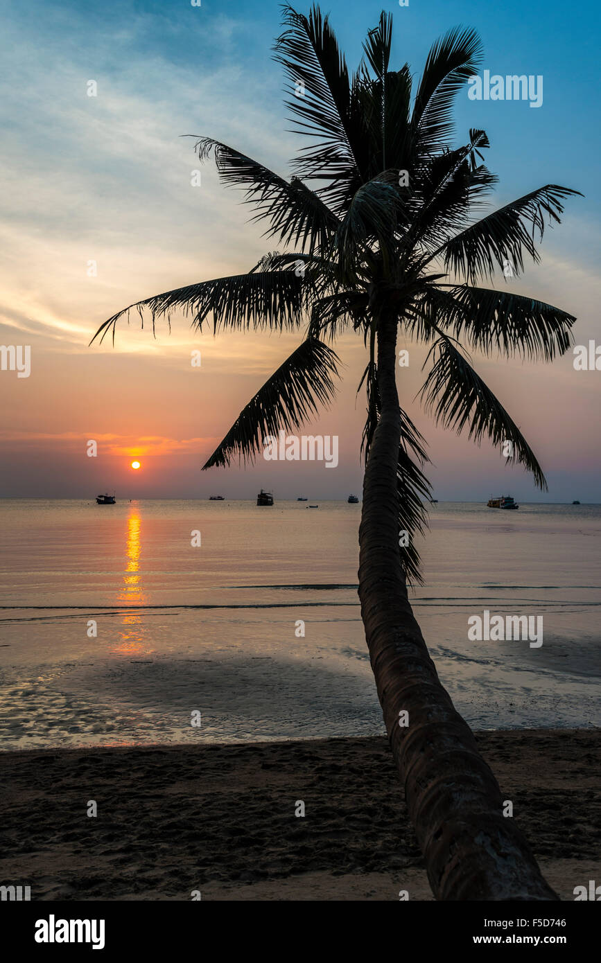 Palm tree by sea at sunset, South China Sea, Gulf of Thailand, Koh Tao, Thailand - Stock Image