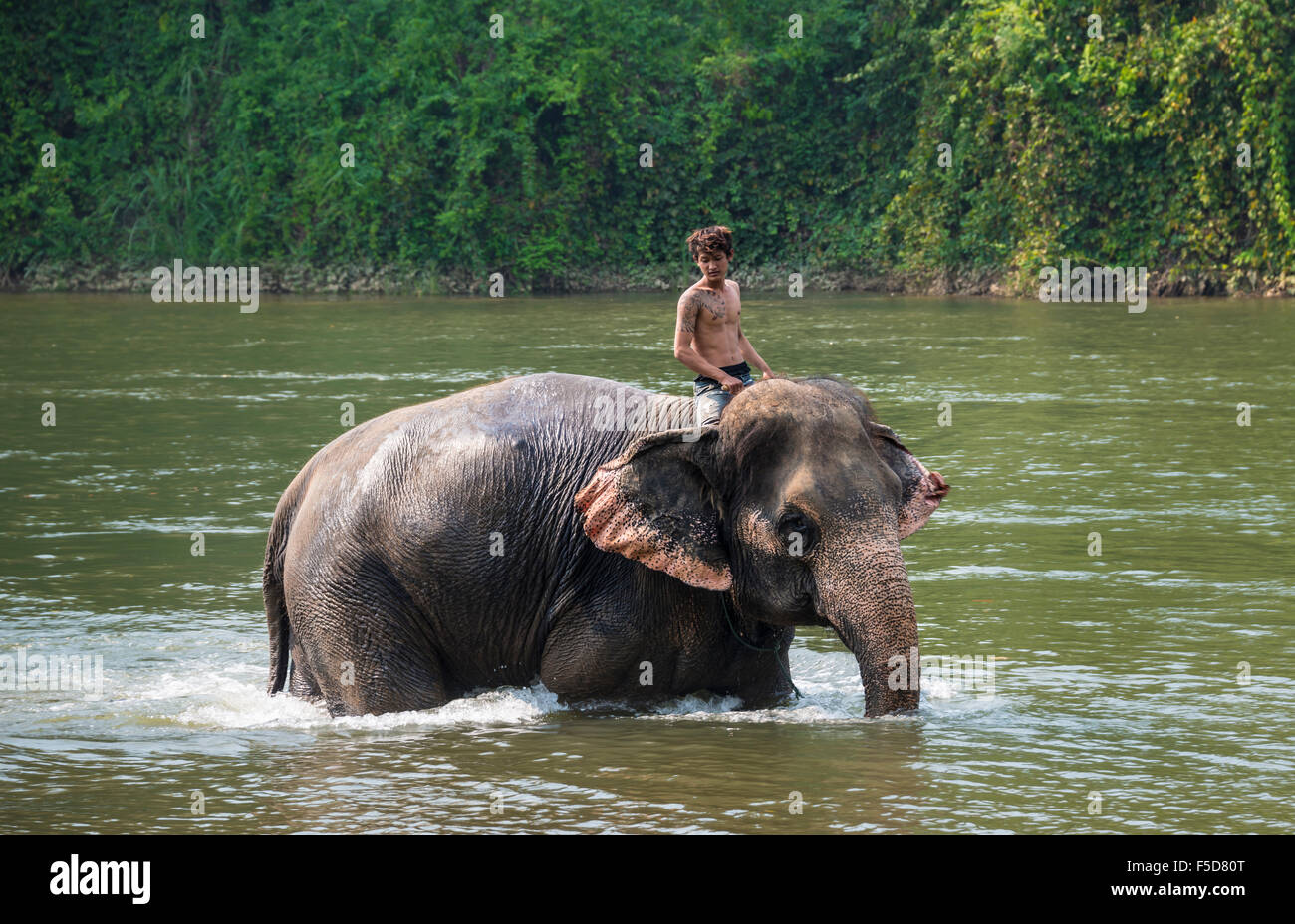 Mahout, local man riding elephant in water, Kanchanaburi Province, Central Thailand, Thailand - Stock Image