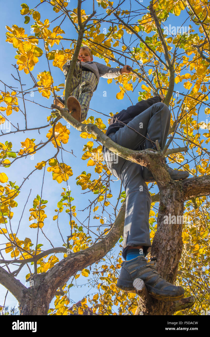 Child Boy on Tree climbing, sunny day, blue sky - Stock Image