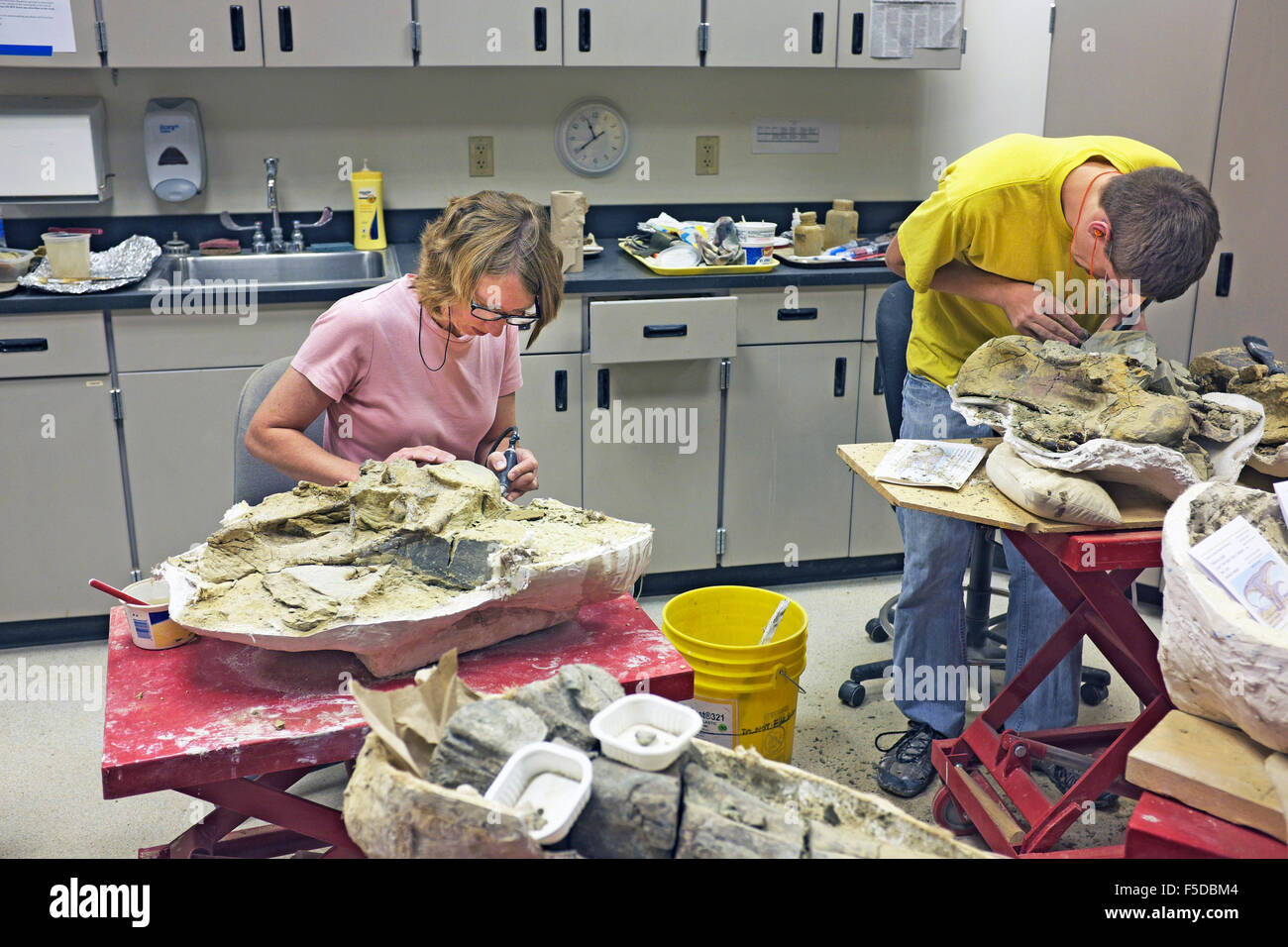 Young scientists at the Museum of the rockies in Bozeman, Montana, clean and preserve dinosaur bones that have been recovered fr Stock Photo